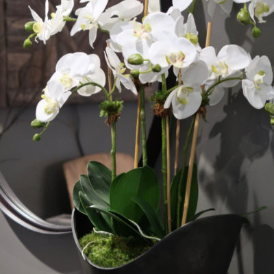 Orchids in Urn